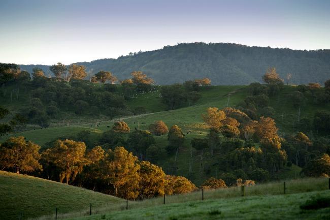 hills around fernleigh
