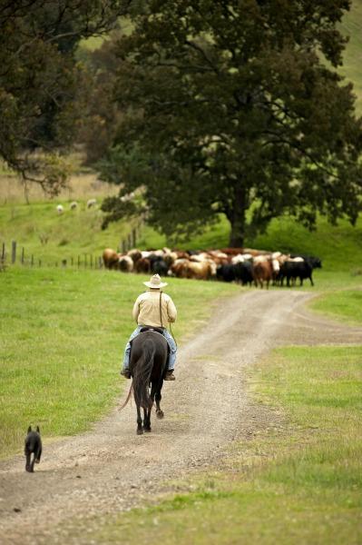 muster on horseback