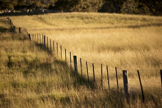 Fernleigh Fenceline